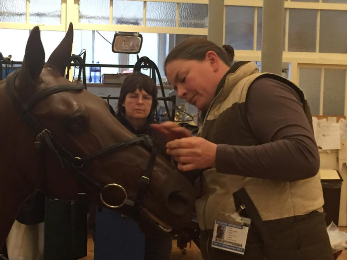 horse and person fitting bridle